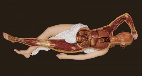 anatomik-venus-12