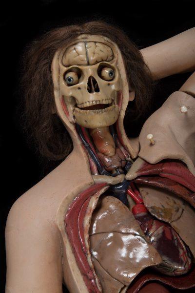 anatomik-venus-14