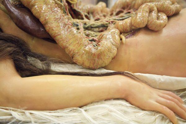 anatomik-venus-5