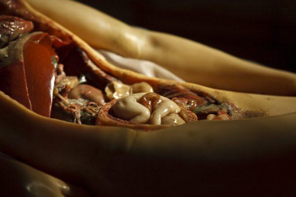 anatomik-venus-6