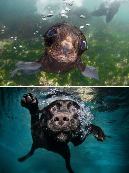 denizde-fok