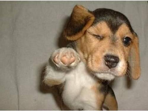 el-kaldıran-köpek