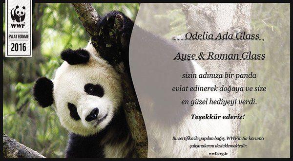 panda-evlat