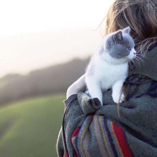 010maceracı kediler