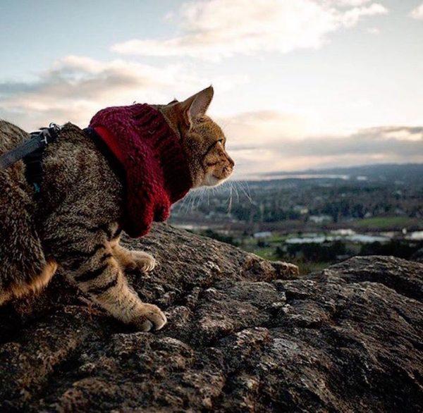 011maceracı kediler