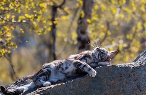 012maceracı kediler