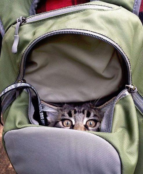 015maceracı kediler