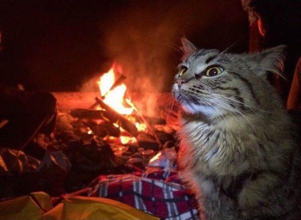 017maceracı kediler