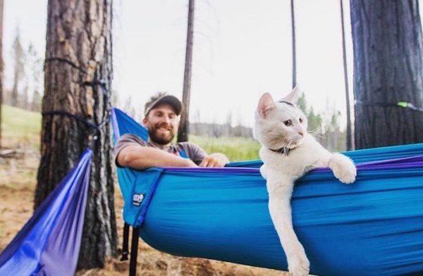 02maceracı kediler
