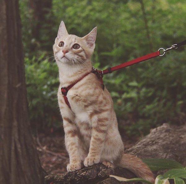 09maceracı kediler