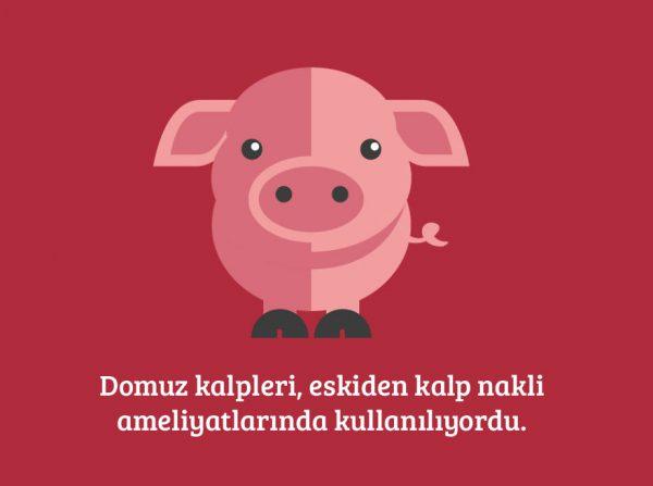 12-domuz