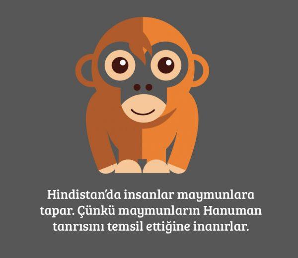 14-maymun