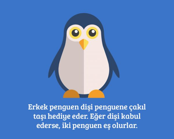 5-penguen