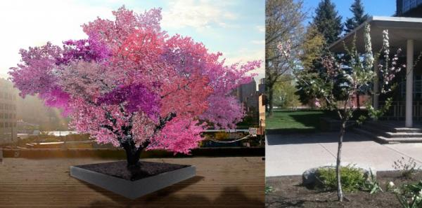 6. Rengarenk Çiçekli Bir Ağaç