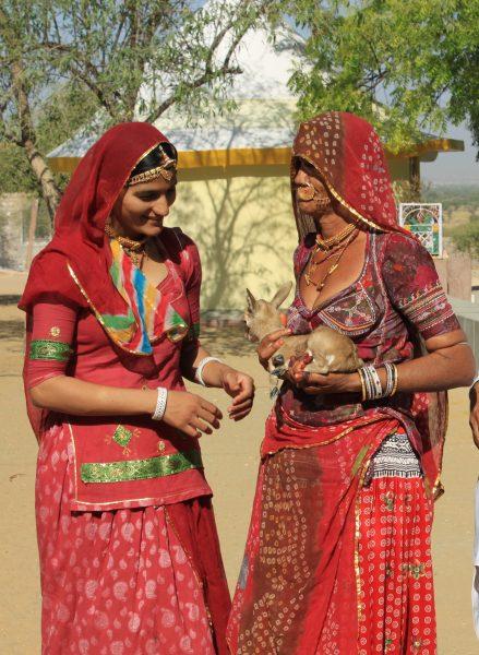 Bishnoi-Kabilesi-geyik-kadın