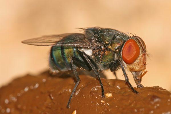 fromm sinekler yanılıyor olamaz