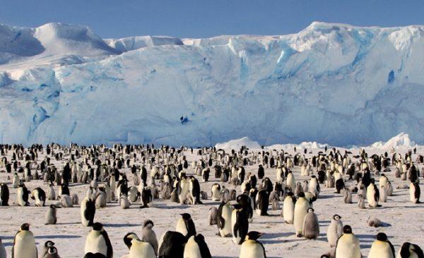 penguen-turler