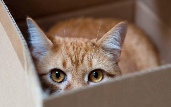 012 cats