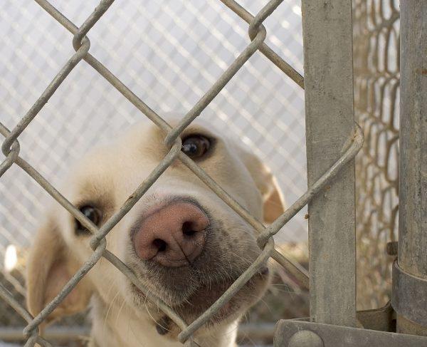 013 barınak köpekleri
