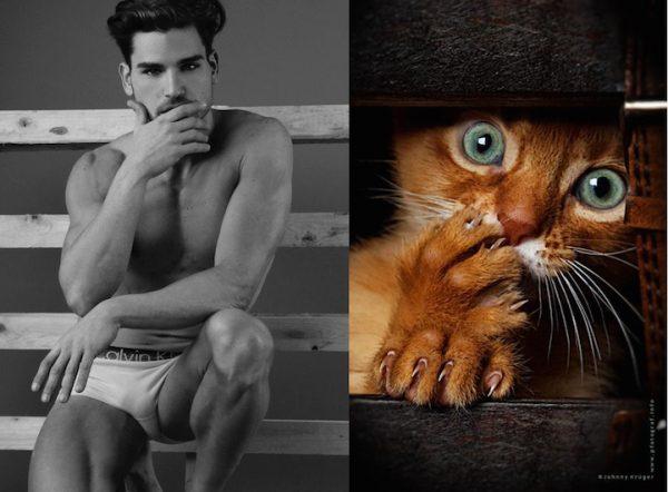 015 erkek vs kedi