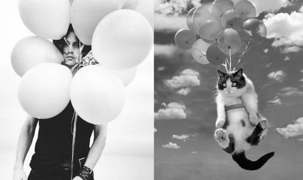 017 erkek vs kedi
