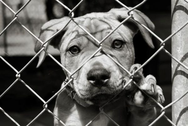 018 barınak köpekleri