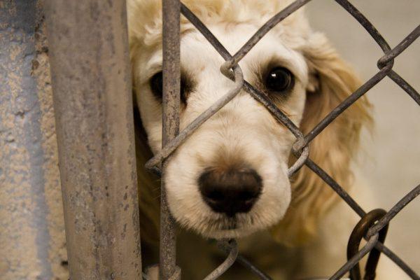 021 barınak köpekleri