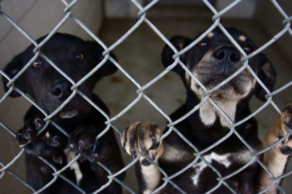 023 barınak köpekleri