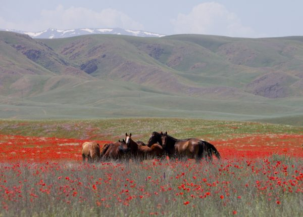 03The steppes of Kazakhstan
