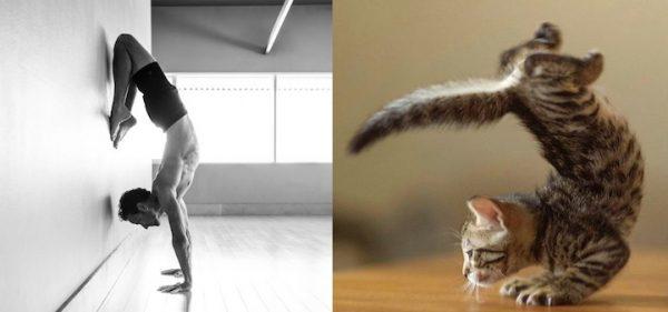 08 erkek vs kedi