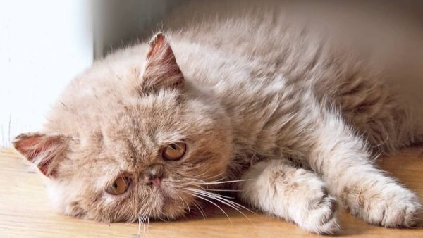 1-kedi-depresyonu