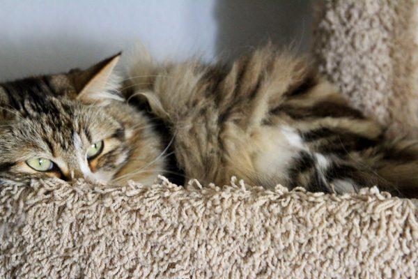 10-kedi-depresyonu