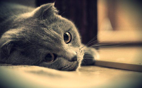 11-kedi-depresyonu