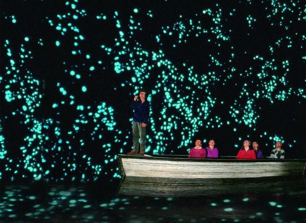 11. Glowworm 11