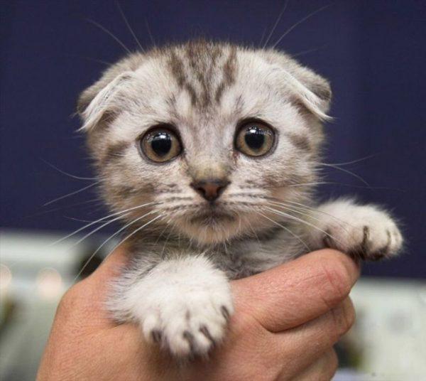 14-kedi-depresyonu