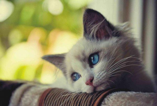 15-kedi-depresyonu