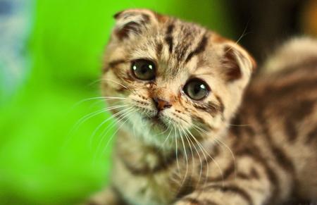 2-kedi-depresyonu