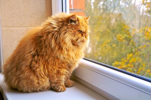 4-kedi-depresyonu