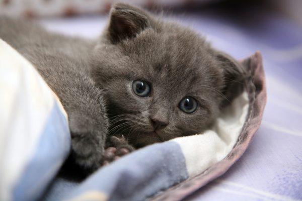 5-kedi-depresyonu