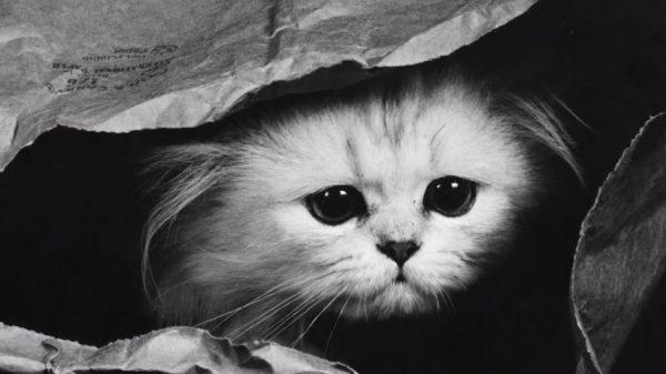 6-kedi-depresyonu
