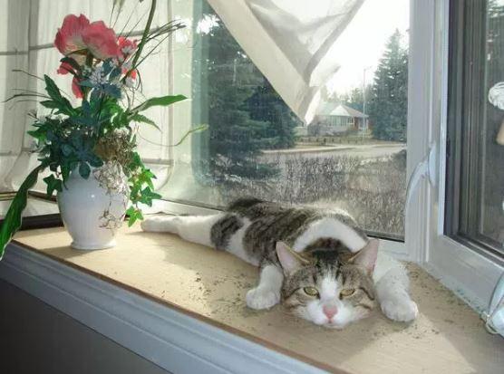 6-kediniz-gevsiyorsa