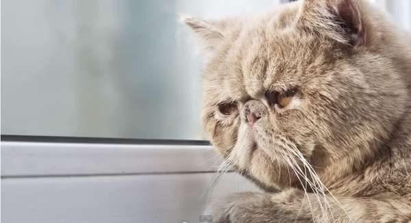 8-kedi-depresyonu