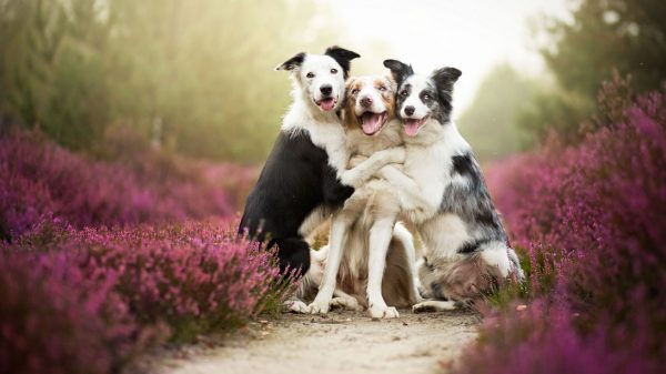 dogsss