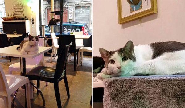 italya-kedi-kafe