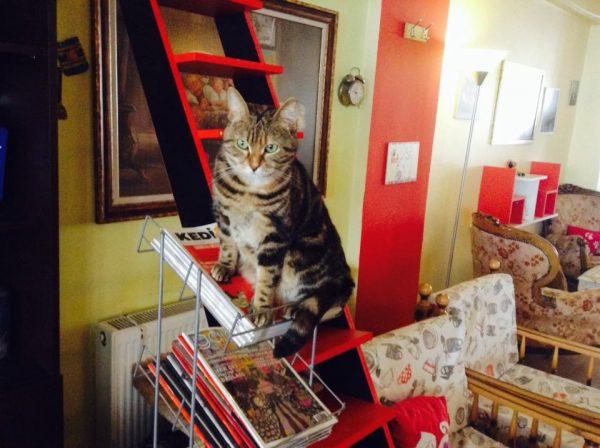 Keşke Bizde De Olsa Dedirten Dünyanın En Minnoş Mekanları Kedi