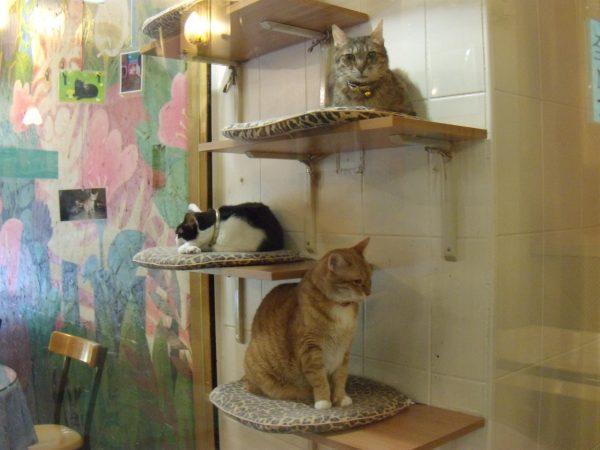 kediler-takilmaca