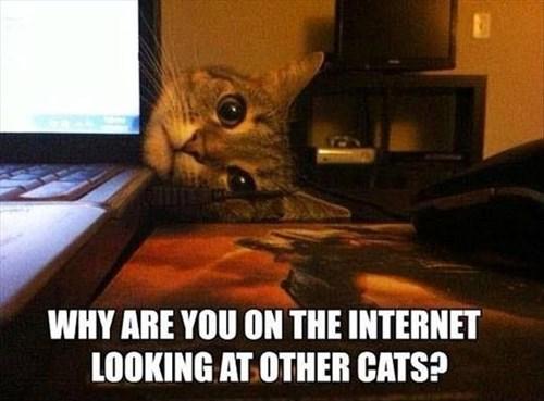 lookingatothercats