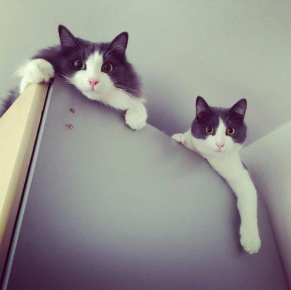 03 iki kedi