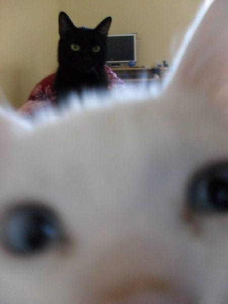 08 iki kedi