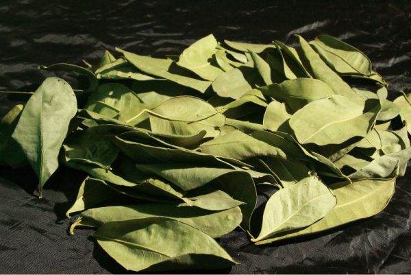 11-yasakli-bitkiler